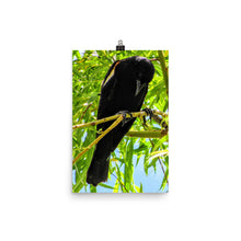 Load image into Gallery viewer, Red-winged Blackbird Photo paper poster
