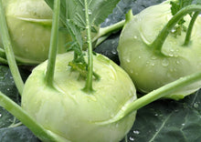 Load image into Gallery viewer, KOHLRABI