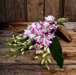 Fuchsia Tipped Dendrobium Orchids