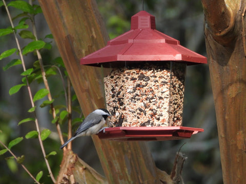 bird on a bird feeder