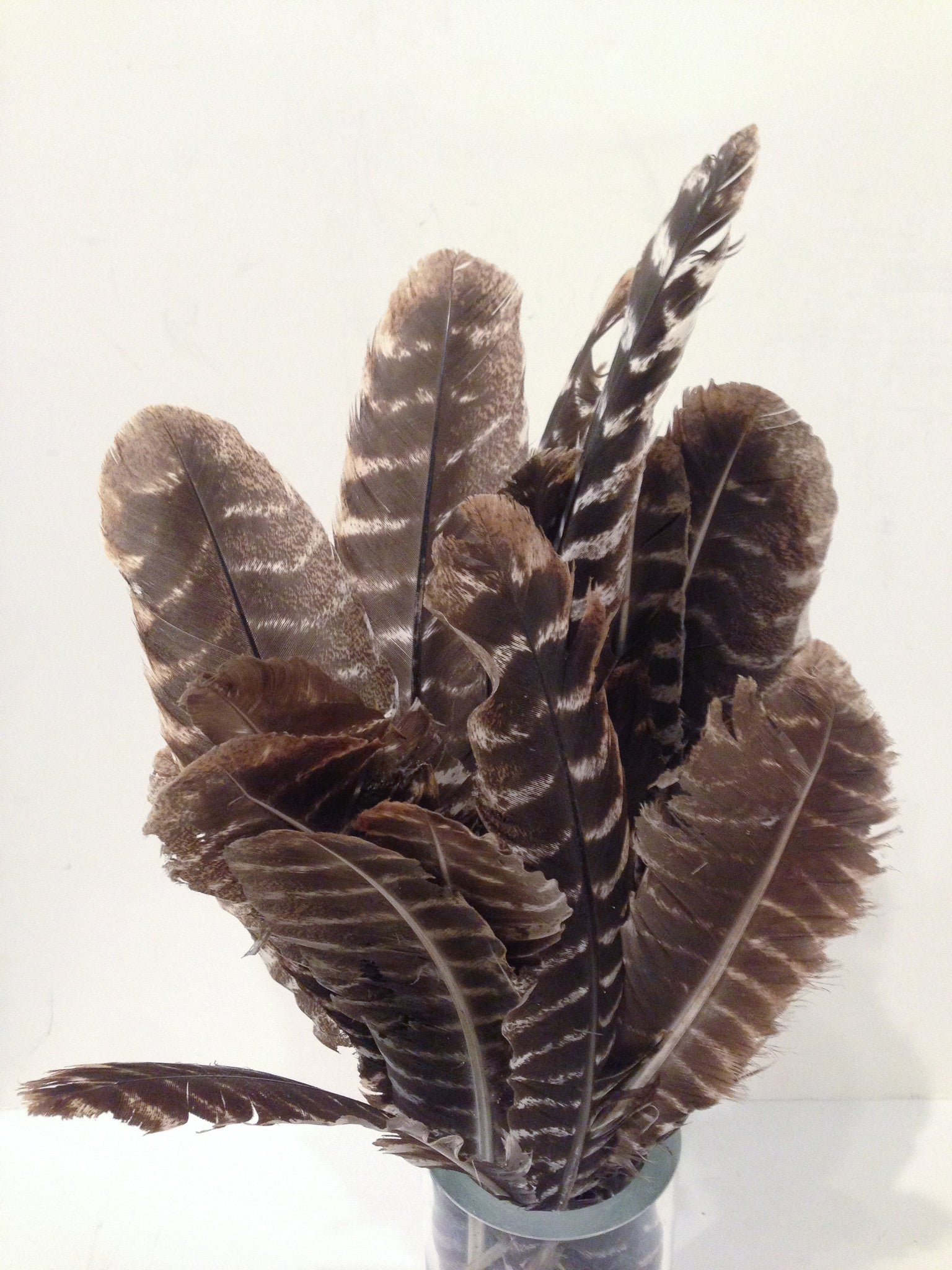 Vase with Turkey Feathers -  Decorative Piece