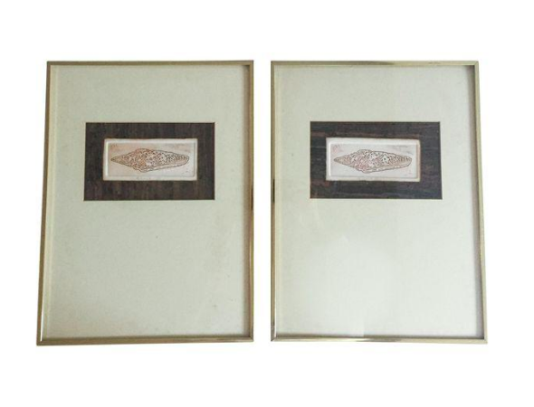 Pair, Mid Century Framed Mollusk Shell Prints, Cork Mats