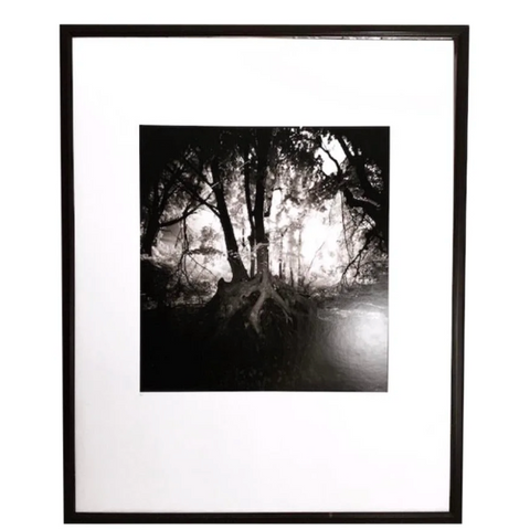 Vintage Large Photo - a Forest