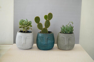 Face Planter/Organiser