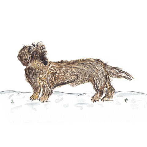 Wintery Beryl A5 Illustration