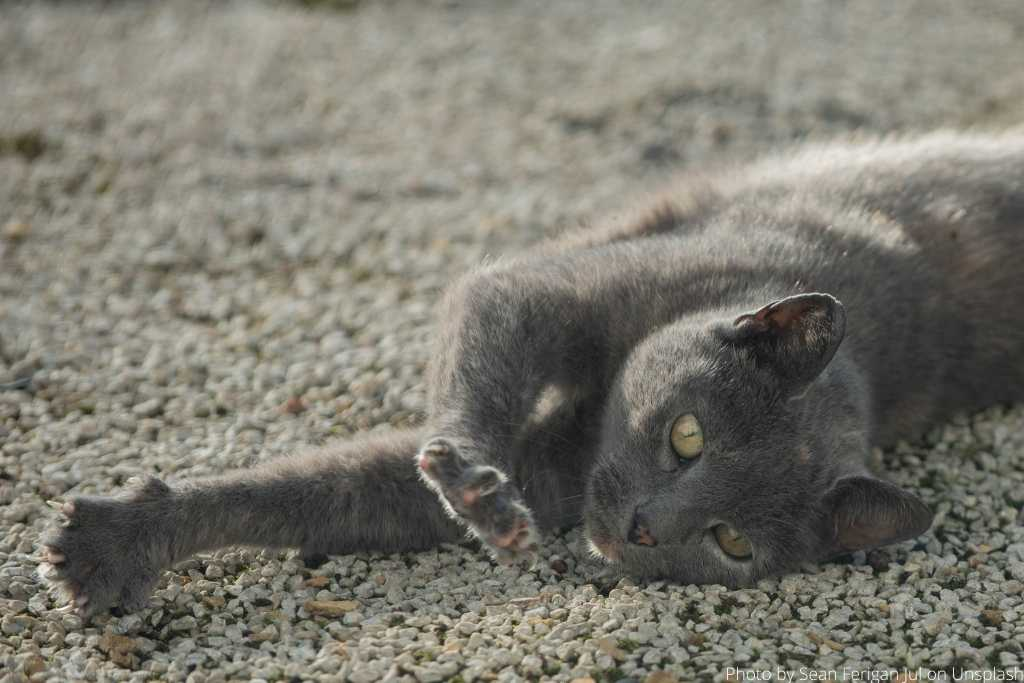 Spaying and Neutering Cats