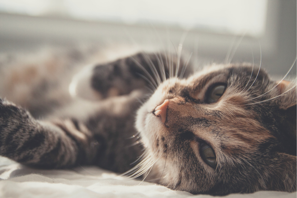 Feline Families 101: Introducing a New Cat to your Family