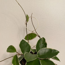 Load image into Gallery viewer, Houseplant Trellis - Halo