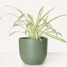 "Load image into Gallery viewer, Contour 12"" Ceramic Planter - Forest Green"