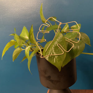 Houseplant Trellis - Monstera