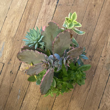 Load image into Gallery viewer, Succulent Planter 6""