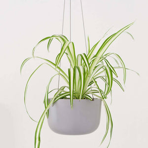 "Hanging 6"" Ceramic Planter"