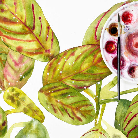 Prayer Plant watercolor with olive green and yellow leaves, finished with details of red and pink. Ingrid Sanchez, CreativeIngrid 2021.