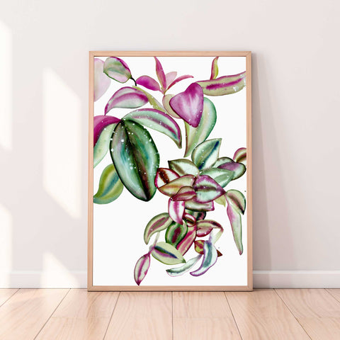 Leaves of a tradescantia plant thriving in a variety of colors, from pale greens, blue, soft pink and burgundy.  Ingrid Sanchez, CreativeIngrid 2021.