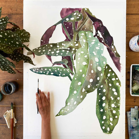 Large leaves of a Polka Dot Begonia highlighting their white dots over a blending of green shades and a deep burgundy.  Ingrid Sanchez, CreativeIngrid 2021.