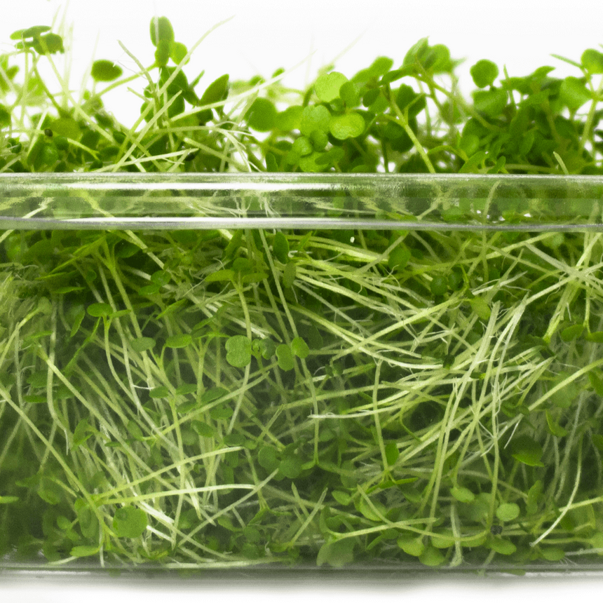 Greek Cress