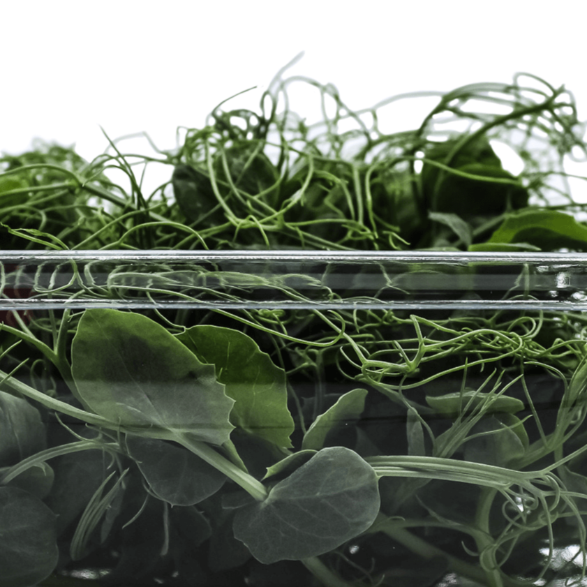 Pea Shoots (Tendril)