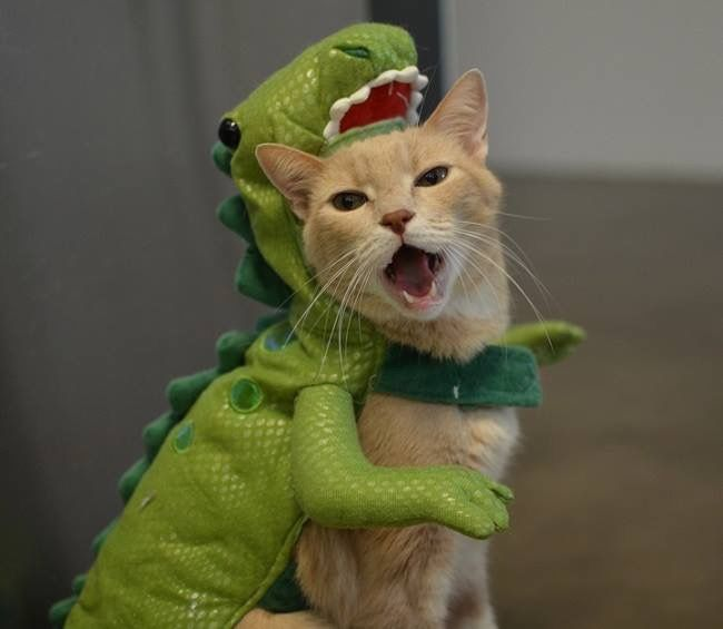 If a cat was a dinosaur...