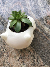 Load image into Gallery viewer, Adorable Bulbasaur Succulent Planter - 3D Printed - Made in Canada