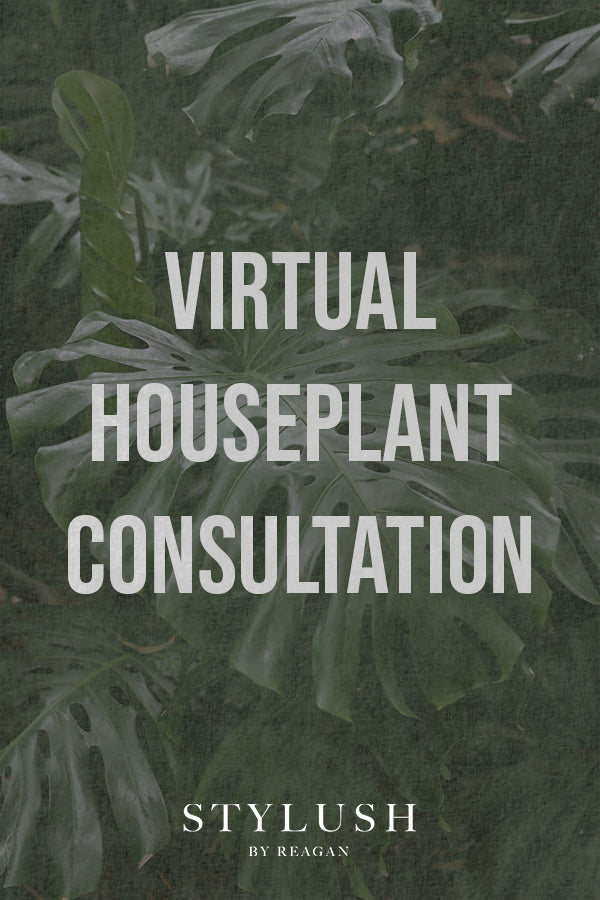 Virtual Houseplant Consultation