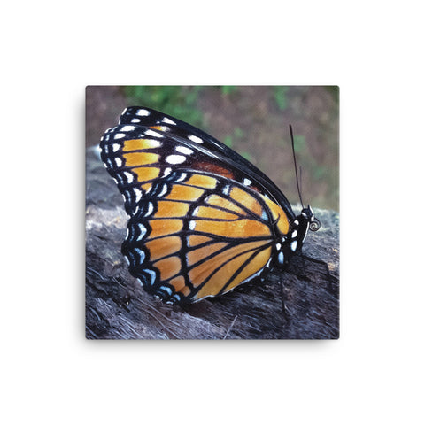 BUTTERFLY - Photo Canvas Print 12x12 to 36x24