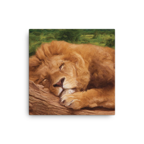 SLEEPING LION Painting Canvas Print 12x12 to 24x36