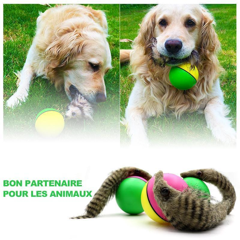 Castor Beaver Ball Electric Pour Chien - ciaovie