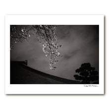 Load image into Gallery viewer, Dozen Editions № 1: Night Sakura at Ioji Temple
