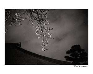 Dozen Editions № 1: Night Sakura at Ioji Temple