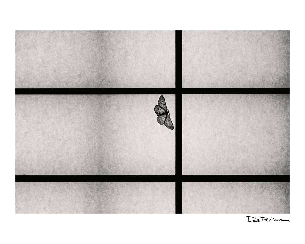 Dozen Editions № 6: Moth on Shoji Screen