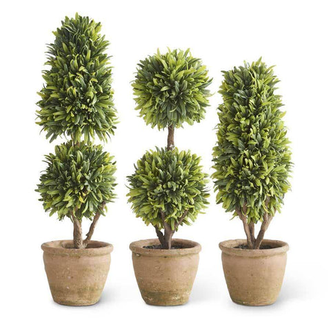 "Podocarpus Topiary in Clay Pot (13.5"" Dbl Ball) - Nest Gifts"