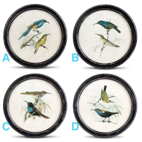 Round Framed Bird Prints - Nest Gifts