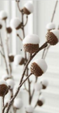 Snowy acorns on branches