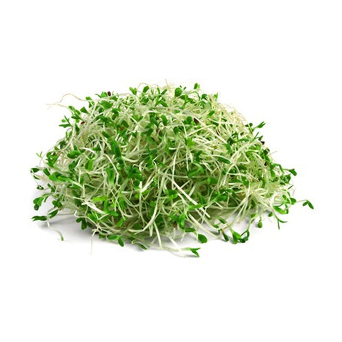 ALFALFA SPROUTS PP 120G