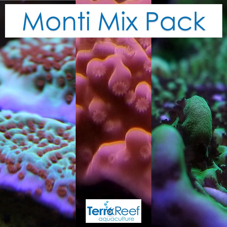 Monti Mix Pack