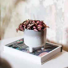 Load image into Gallery viewer, Ceramic Mini Planter