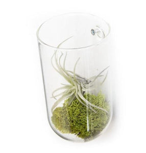 Clear Glass Wall Vase
