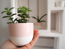 Load image into Gallery viewer, Pink Ceramic Mini Plant Pot