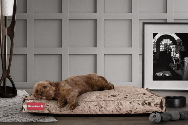 The-Mattress-Orthopedic-Classic-Memory-Foam-Dog-Bed-Glitz-Truffle_2