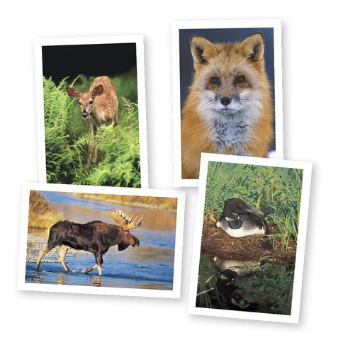 Wildlife of Vermont Notecards