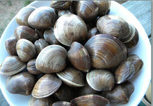 Load image into Gallery viewer, Shellfish - Cedar Shoals Clams - 5# Bag