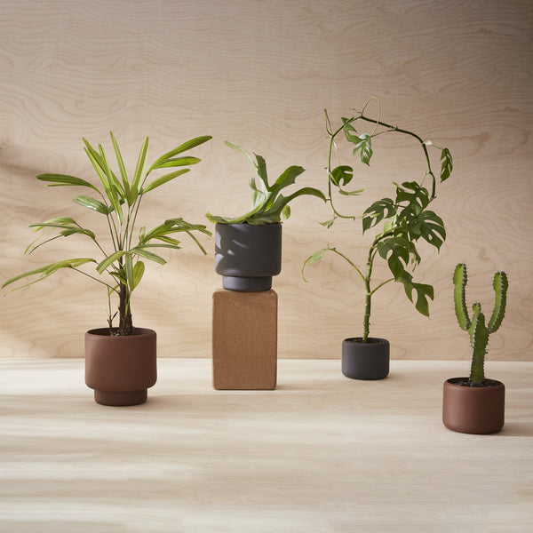 BOTANY Plant Pot, Small