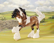 Load image into Gallery viewer, Gypsy Vanner