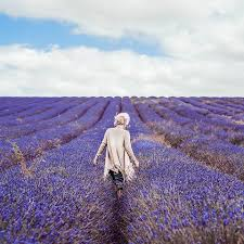 A person in an ivory coloured top, standing in a vast field of lavender rows with arms swung out from her body as if she is swaying