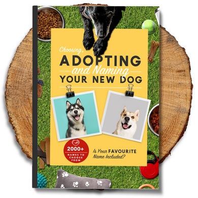 Choosing, Adopting and Naming Your New Dog Ebook - Petizon
