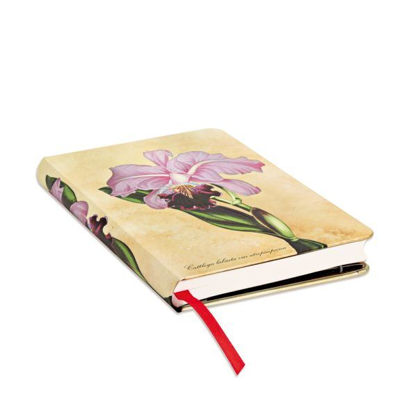 Brazilian Orchid Mini Journal