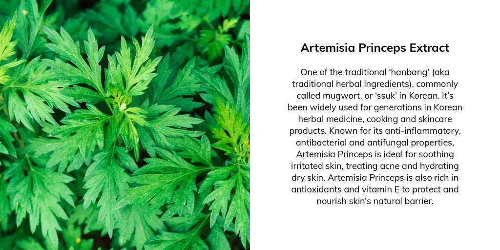One of the traditional 'hanbang' (aka traditional herbal ingredients), commonly called mugwort, or 'ssuk' in Korean. It's been widely used for generations in Korean herbal medicine, cooking and skincare products. Known for its anti-inflammatory, antibacterial and antifungal properties, Artemisia Princeps is ideal for soothing irritated skin, treating acne and hydrating dry skin. Artemisia Princeps is also rich in antioxidants and vitamin E to protect and nourish skin's natural barrier.