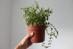 Pure White Plant Pot