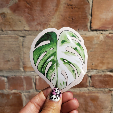 Albo Monstera Sticker