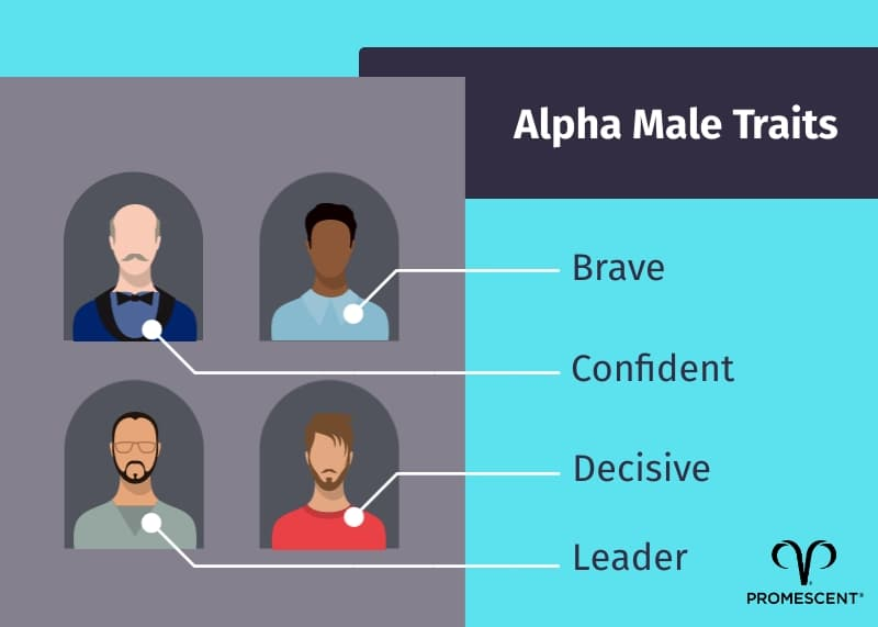 Common traits of alpha males